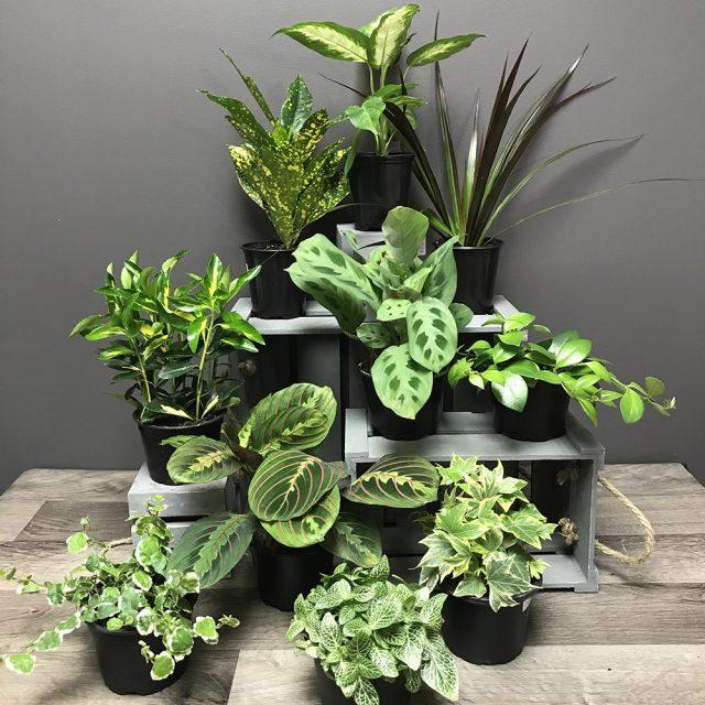 10 Plante 4po