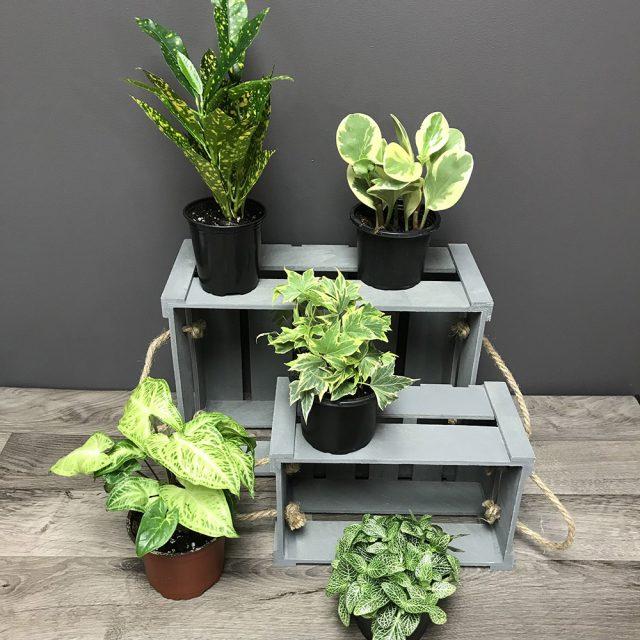 5 plantes 4po
