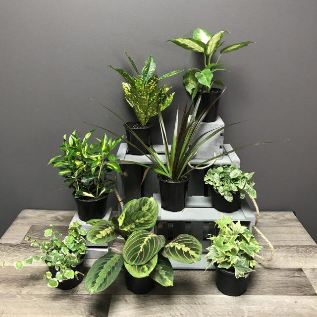 8 plantes 4po