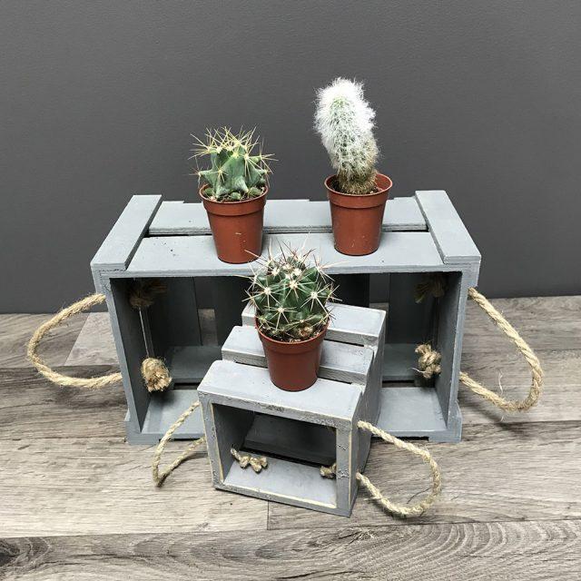Trio de plantes cactus
