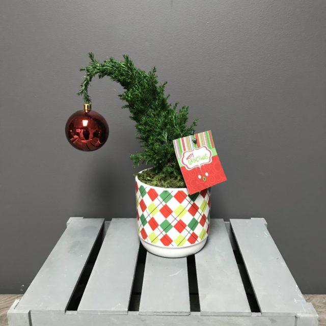Plante Merry Grinchmas