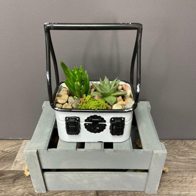 Le coffre de succulentes