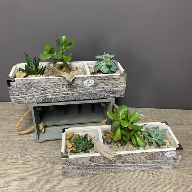 Jardin de plantes grasses