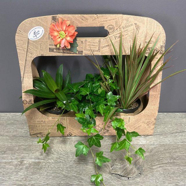 Trio de plantes